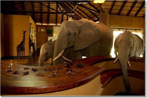 hotel elefantes