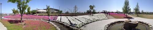 2012-04-28 10.21.26 芝桜