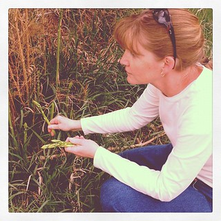 Carey picking wild asparagus