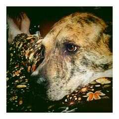 Emo dog is Emo.