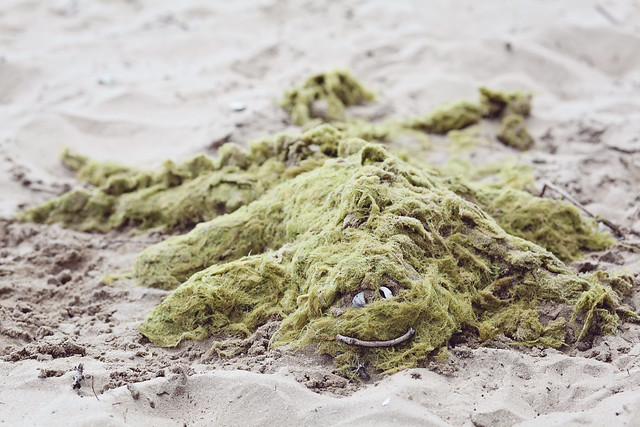 Sandbanks, Picton