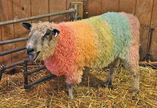 Tie Dye sheep from Wool Fest