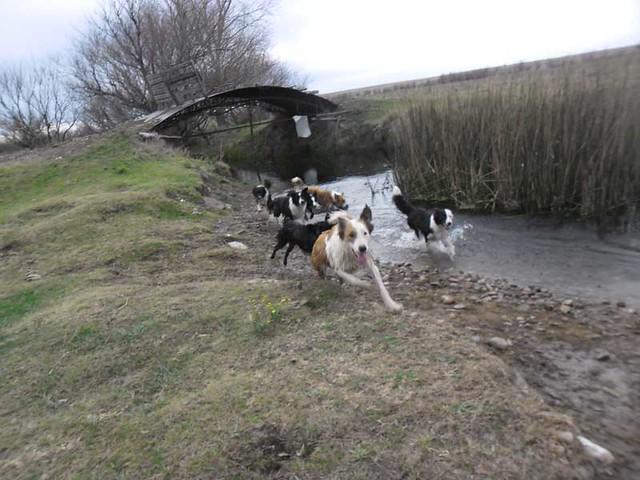 El entorno natural para criar un Border Collie