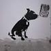 Dog, Stewy stencils, Ruby Lounge, Margate
