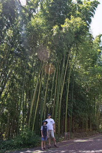 in front of bamboo
