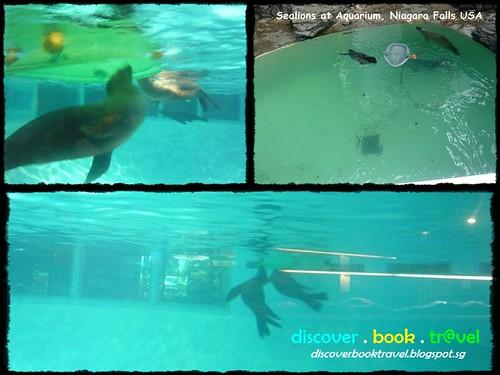 Aquarium Of Niagara Discover Book Travel