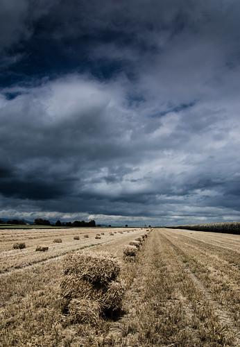 Bottes de paille sous un ciel orageux Désat