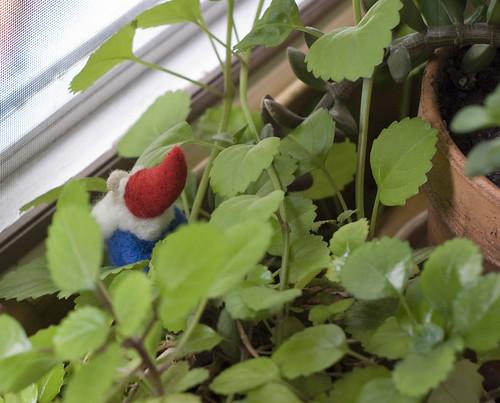 Tomte Hiding