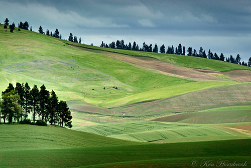 washington fields palouse