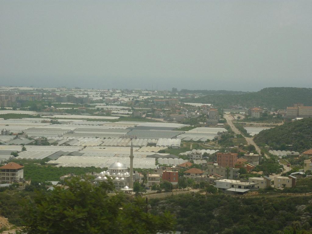 Говорят, территория современного города покрыта теплицами на 80%