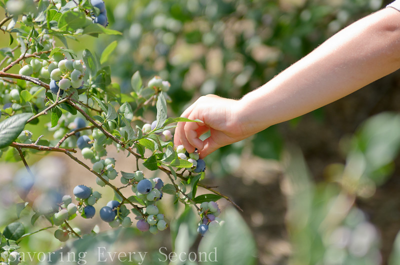 Blueberry Picking-019.jpg