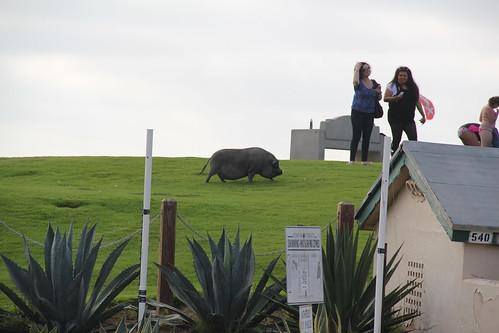 A huge pig at Palisades Park