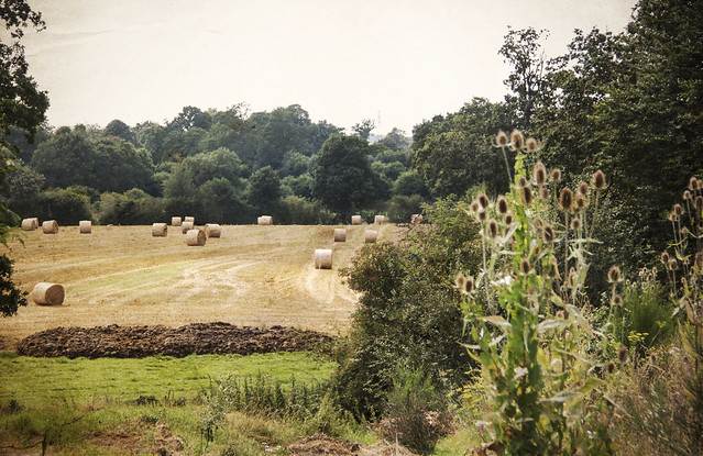 View to the farmyard