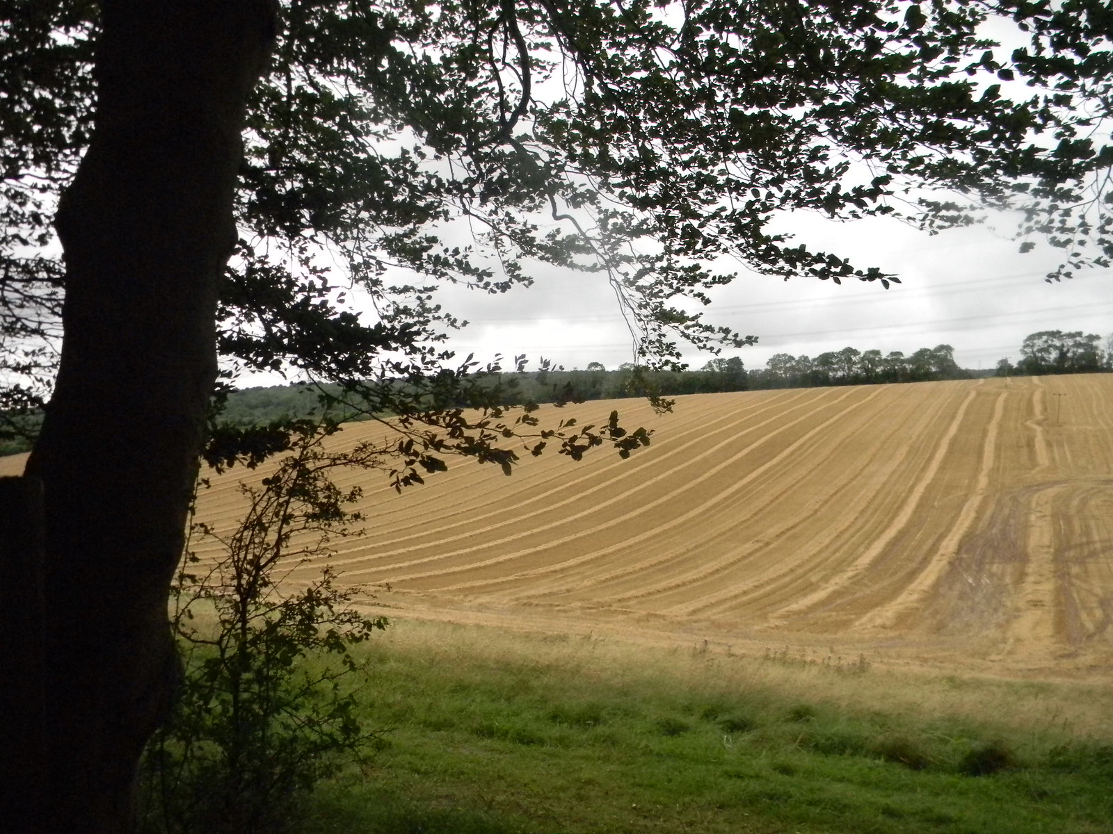 Ploughed field 2 Petersfield to Rowlands Castle
