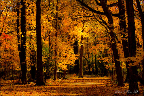fallcolors glenview canonef70200f4lisusm canoneos60d northfieldwoods autumn2012