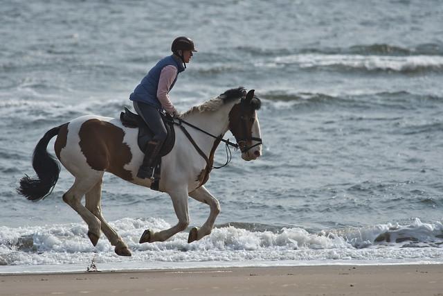 Simon Watling - Horse on the beach