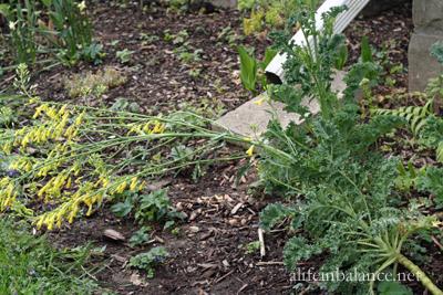 tuesday_gardening_5