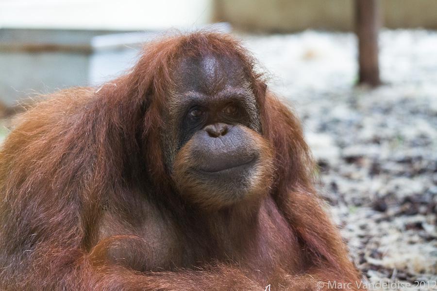 Sortie au Zoo D'amnéville le 05 Mai 2012 : Les photos 7002888822_0801e98204_o
