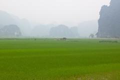 Baie d'Ha Long Terrestre - Ninh Binh - Hoa Lu - 19