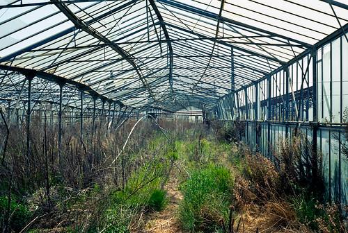 Greenhouse / 7