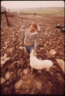 John Dolezal in muddy sheep-pen of his farm near Bee Nebraska. Twice normal rainfall for this year has greatly increased problems of local farmers, May 1973