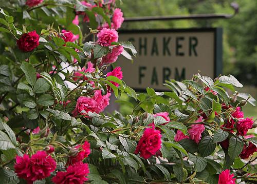 Shaker Farm