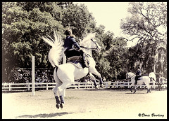 Royal Lippizan Stallions, FL