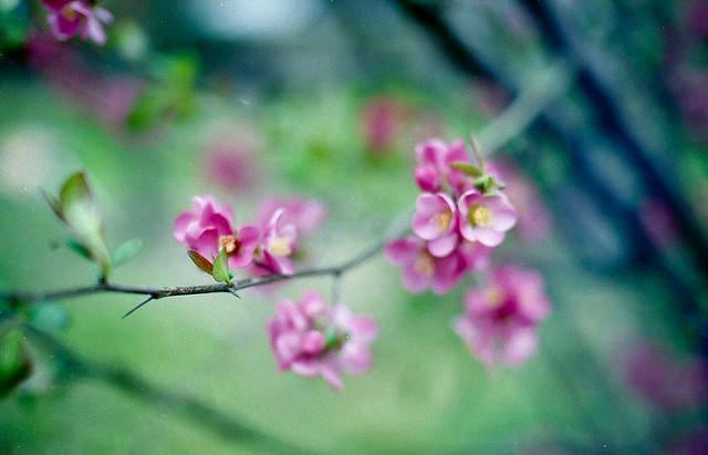 Spring memories : la douceur