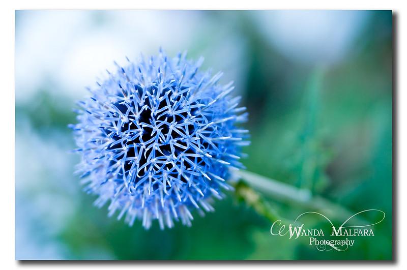 Flowers 133-2 wm