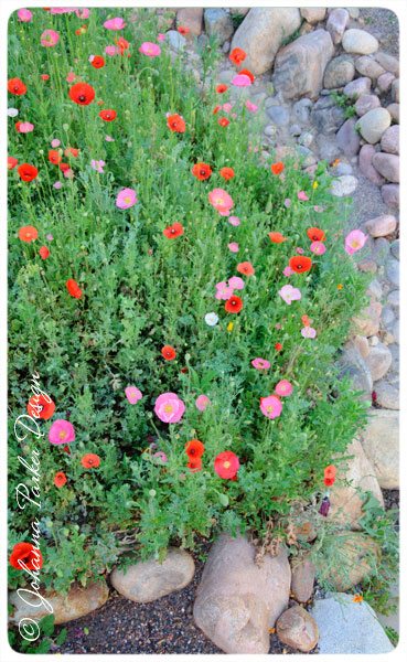 Edge-of-Poppy-knoll