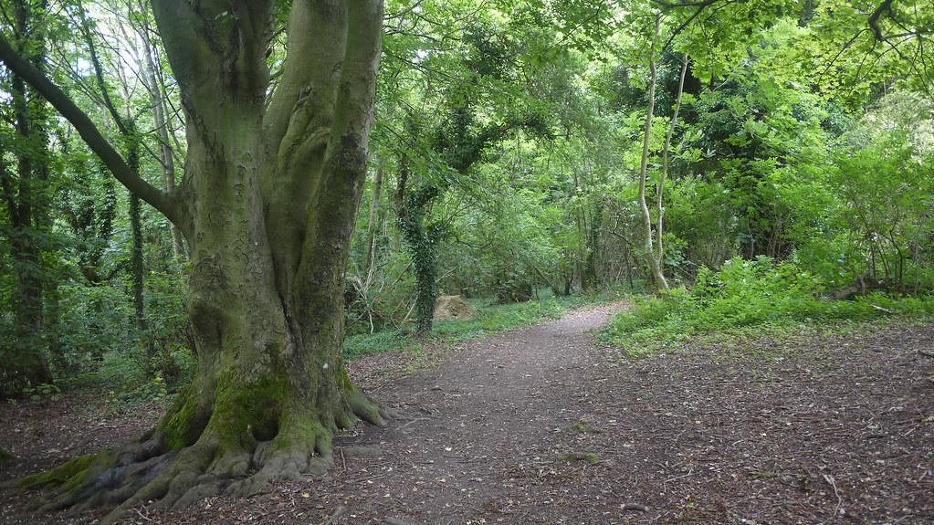 Peaceful Woodland