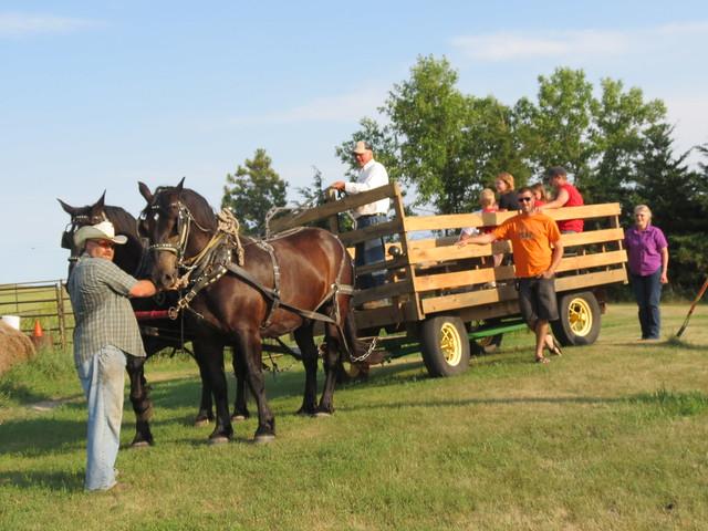 Horse buggie ride