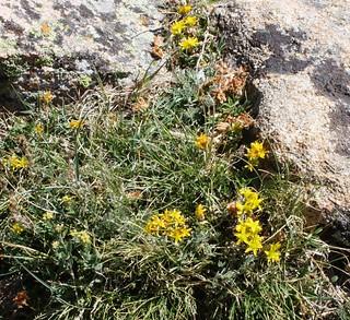 MRMKR 2012 - Wildflowers