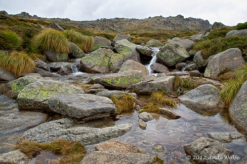 Alpine of Australia by andiwolfe