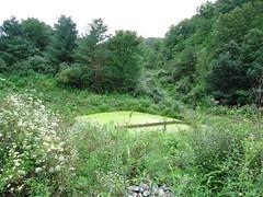Green Algae Pond