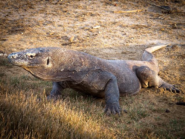 Parque nacional de Komodo. Islas de Indonesia central