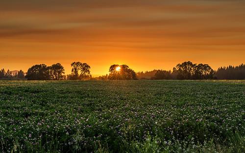 trees sunset summer sunlight nature oregon landscape evening oak nikon day cloudy july hillsboro goldenhour 2012 d800