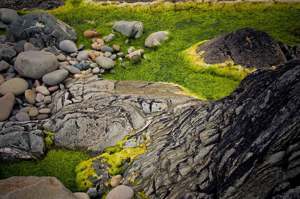 paisaje de algas