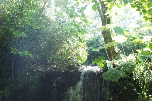 裏山の池のほとり