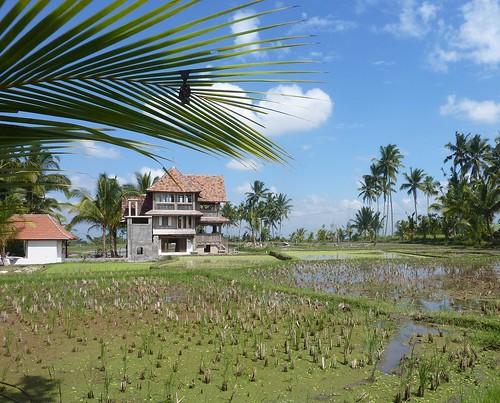 Bali- Ubud-Rizières (8)