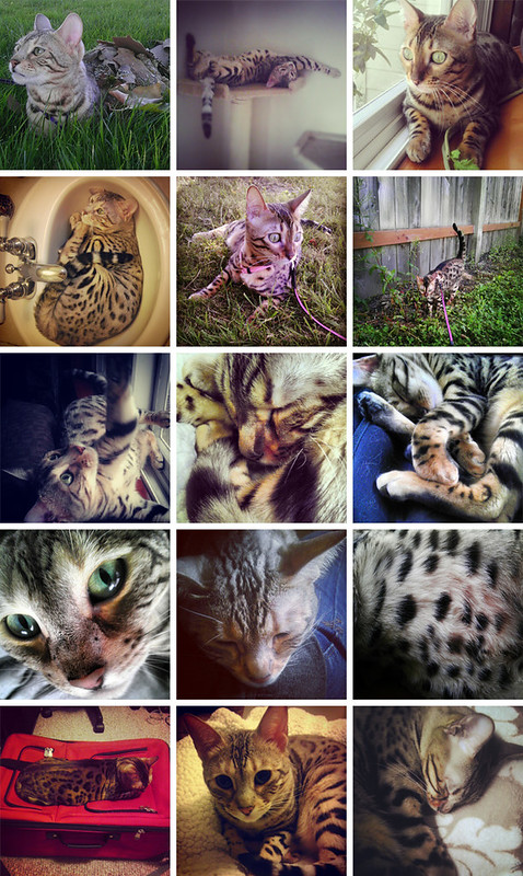 Instagram Cats 1b
