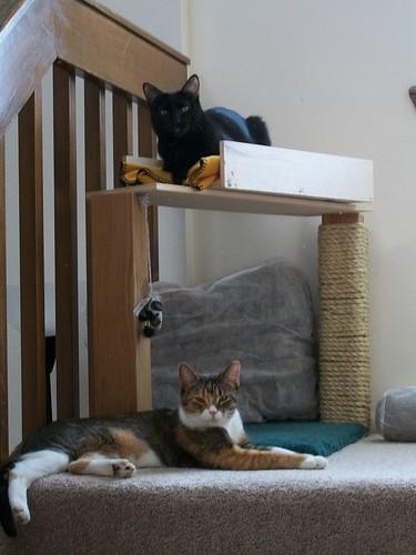 Cat Condo by Kansai Monkey