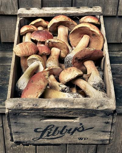 Libbys Porcini Mushrooms