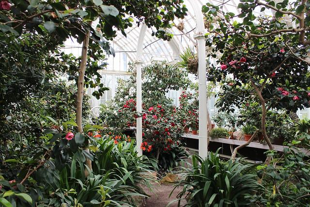 hejregina.blogspot.com palmhuset2