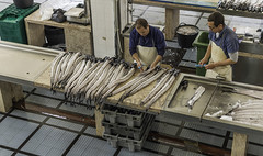 cleaning swordfish for selling
