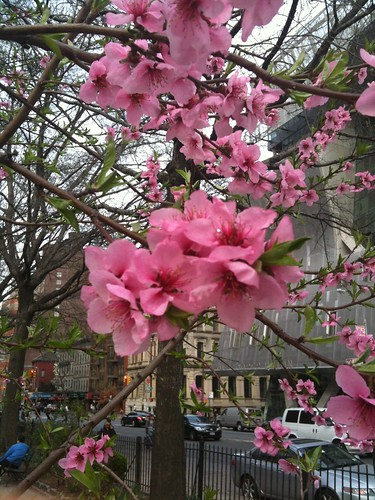 Hibiscus flowers near the Cooper Union