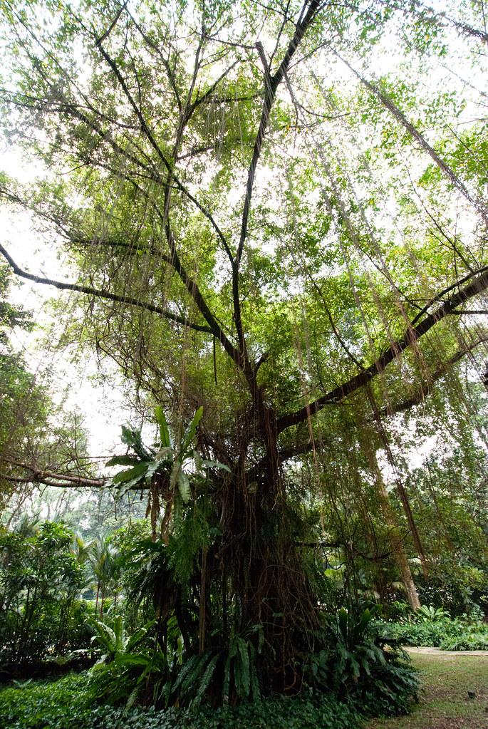 Swampy tree