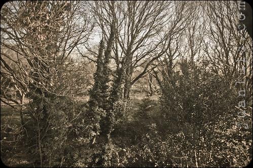 Esher Woods