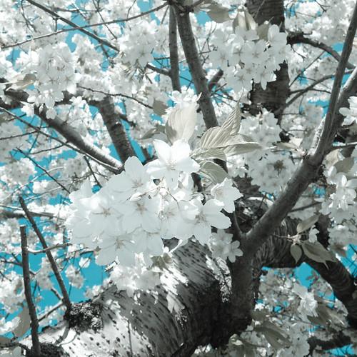Joy Spring by mdx