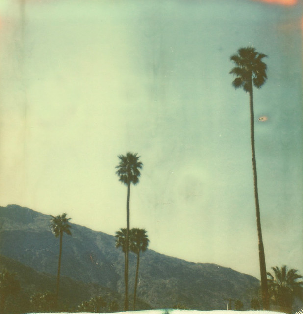 palm springs (seven)